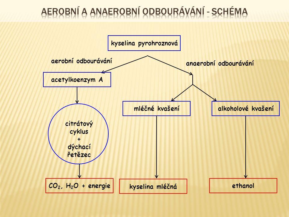 kyselina pyrohroznová aerobní odbourávání anaerobní odbourávání acetylkoenzym A citrátový cyklus + dýchací řetězec CO 2, H 2 O + energie mléčné kvašeníalkoholové kvašení kyselina mléčná ethanol