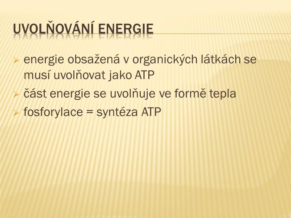  energie obsažená v organických látkách se musí uvolňovat jako ATP  část energie se uvolňuje ve formě tepla  fosforylace = syntéza ATP