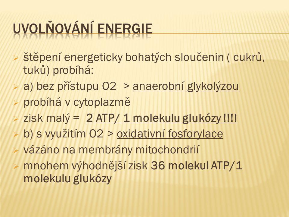  štěpení energeticky bohatých sloučenin ( cukrů, tuků) probíhá:  a) bez přístupu O2 > anaerobní glykolýzou  probíhá v cytoplazmě  zisk malý = 2 ATP/ 1 molekulu glukózy !!!.