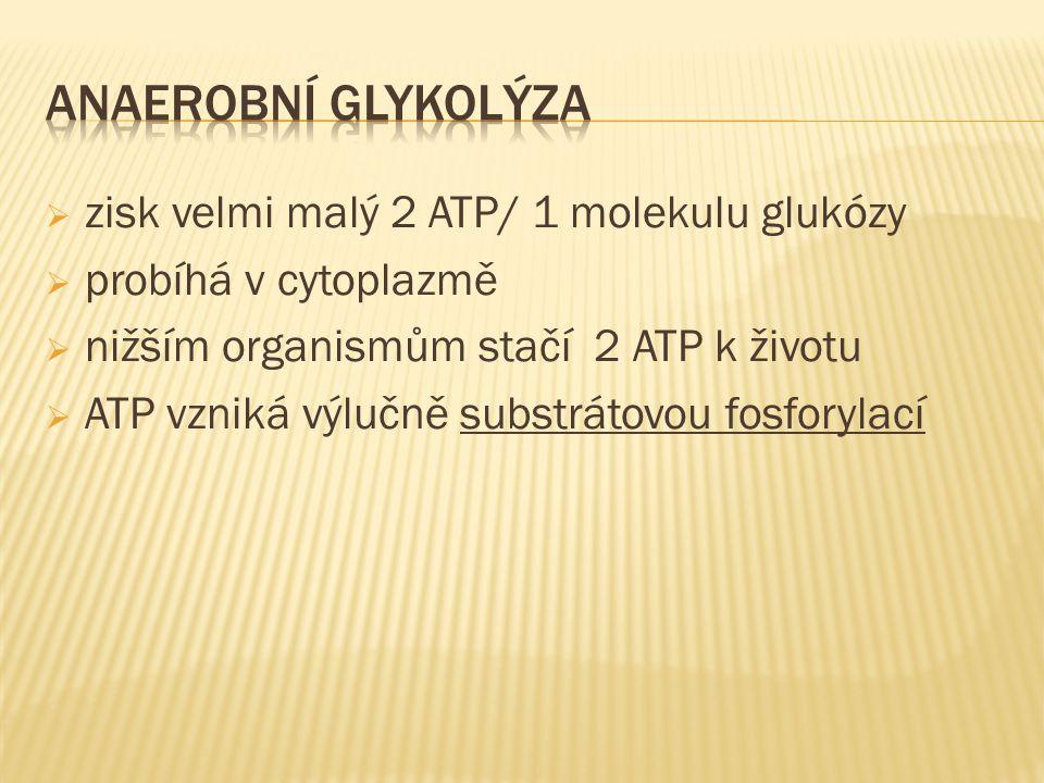  zisk velmi malý 2 ATP/ 1 molekulu glukózy  probíhá v cytoplazmě  nižším organismům stačí 2 ATP k životu  ATP vzniká výlučně substrátovou fosforylací