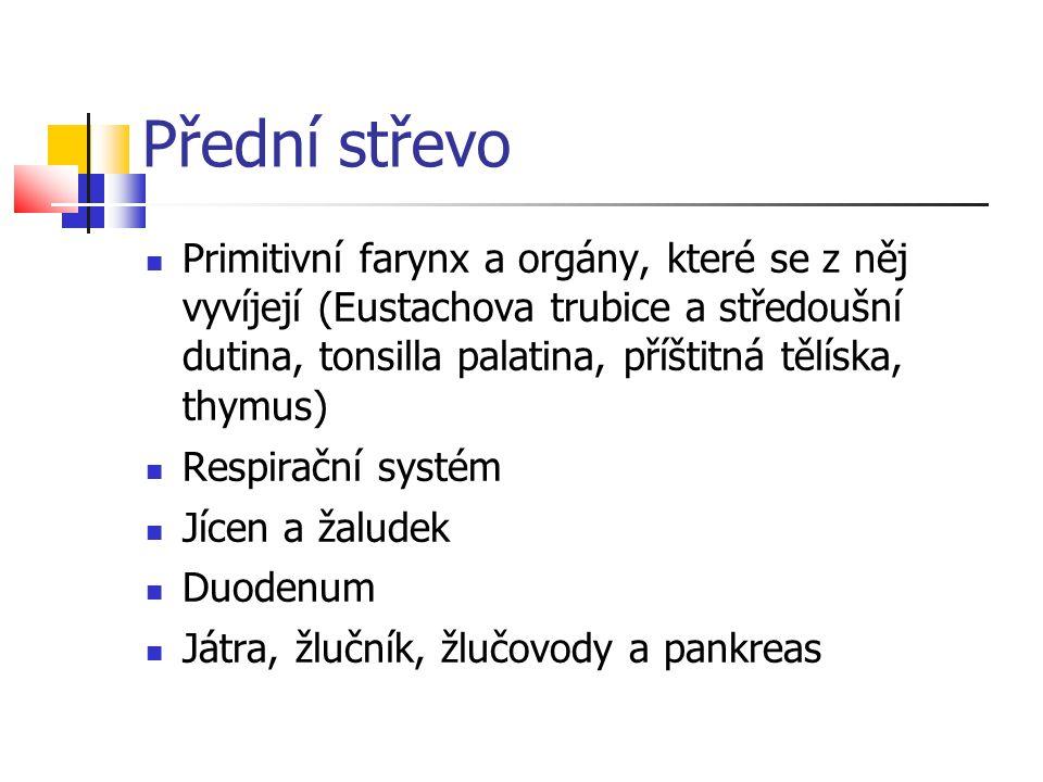 Přední střevo Primitivní farynx a orgány, které se z něj vyvíjejí (Eustachova trubice a středoušní dutina, tonsilla palatina, příštitná tělíska, thymu