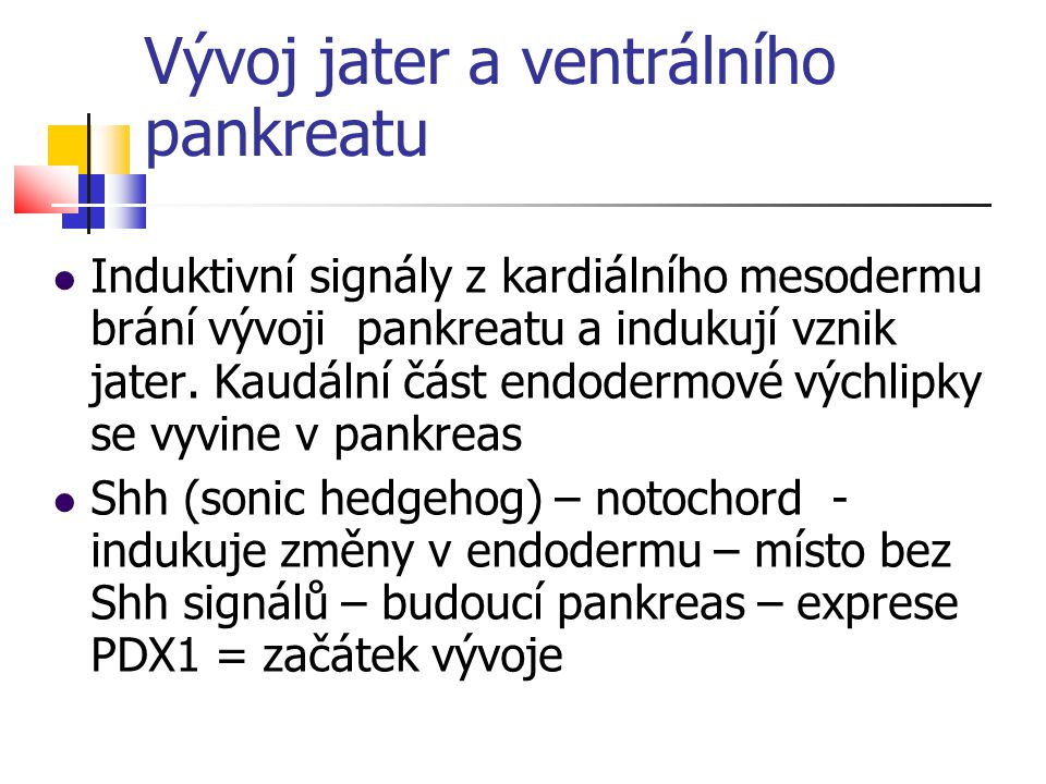 Vývoj jater a ventrálního pankreatu Induktivní signály z kardiálního mesodermu brání vývoji pankreatu a indukují vznik jater. Kaudální část endodermov