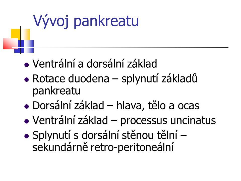 Vývoj pankreatu Ventrální a dorsální základ Rotace duodena – splynutí základů pankreatu Dorsální základ – hlava, tělo a ocas Ventrální základ – proces