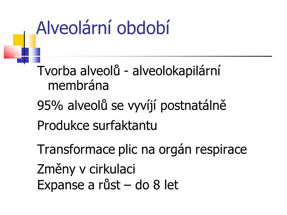 Alveolární období Tvorba alveolů - alveolokapilární membrána 95% alveolů se vyvíjí postnatálně Produkce surfaktantu Transformace plic na orgán respira