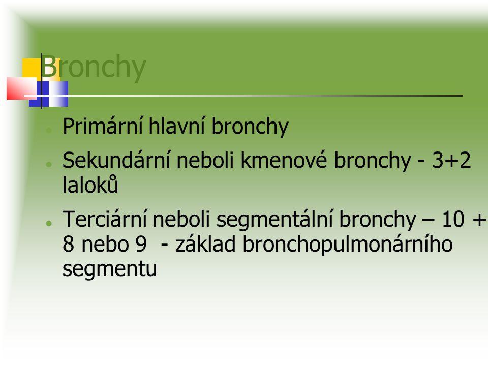 Bronchy Primární hlavní bronchy Sekundární neboli kmenové bronchy - 3+2 laloků Terciární neboli segmentální bronchy – 10 + 8 nebo 9 - základ bronchopu
