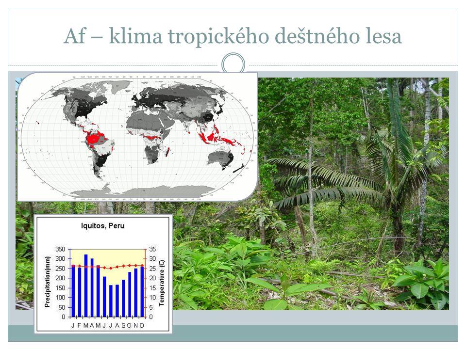 Af – klima tropického deštného lesa