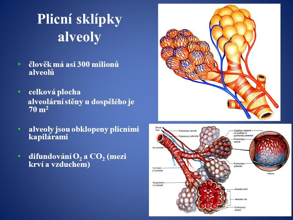 Plicní sklípky alveoly člověk má asi 300 milionů alveolů celková plocha alveolární stěny u dospělého je 70 m 2 alveoly jsou obklopeny plicními kapilárami difundování O 2 a CO 2 (mezi krví a vzduchem)