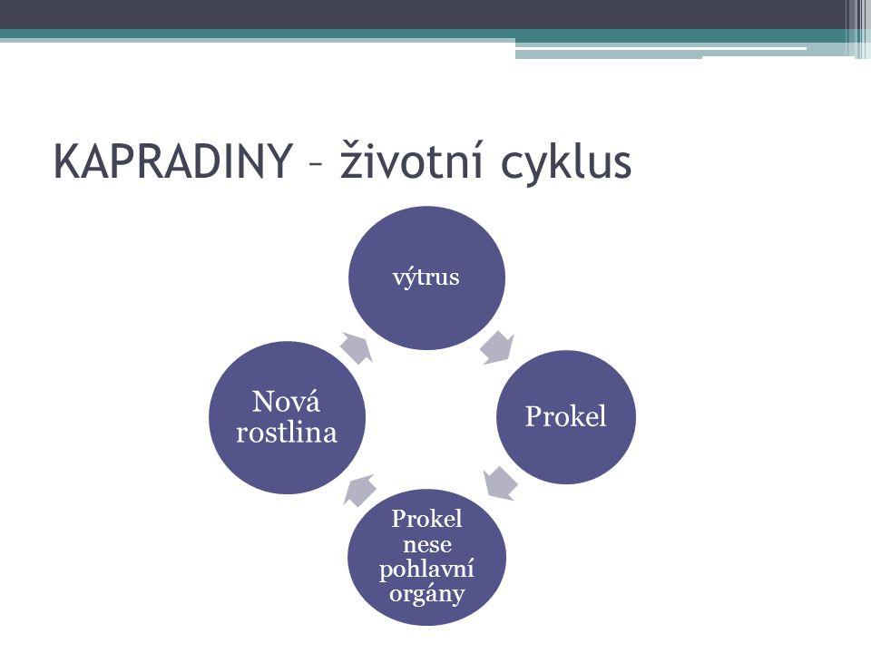 KAPRADINY – životní cyklus Výtrus Prokel (vláknitý, lupenitý, srdčitý) Prokel žije krátce – nese pohlavní orgány ▫Samčí pelatky (pohlavní buňky mají bičík) ▫Samičí zárodečníky Nová rostlina