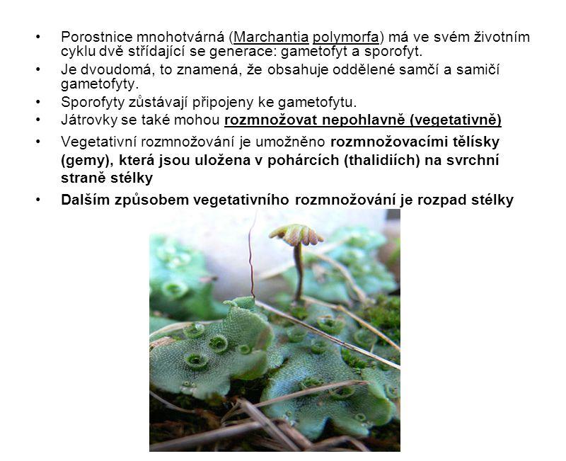 Porostnice mnohotvárná (Marchantia polymorfa) má ve svém životním cyklu dvě střídající se generace: gametofyt a sporofyt. Je dvoudomá, to znamená, že