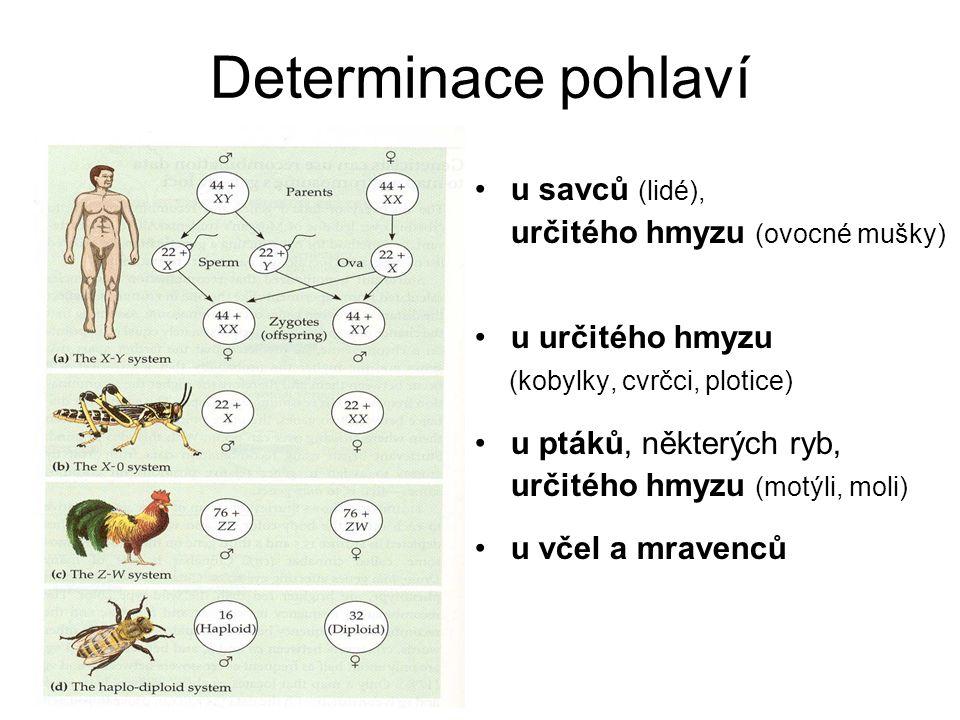 Determinace pohlaví u savců (lidé), určitého hmyzu (ovocné mušky) u určitého hmyzu (kobylky, cvrčci, plotice) u ptáků, některých ryb, určitého hmyzu (