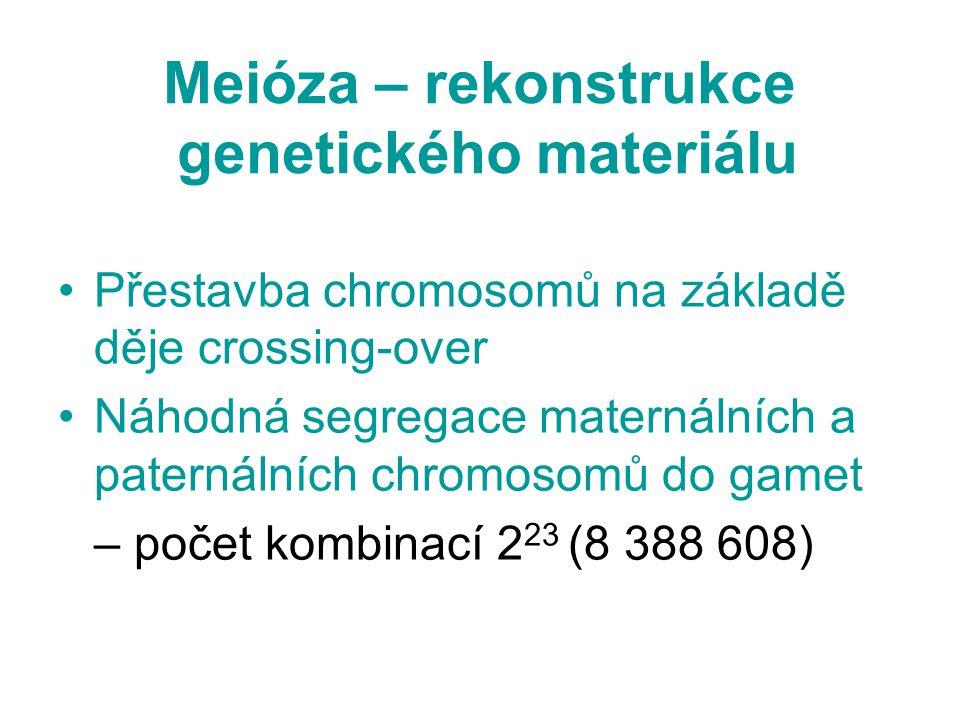 Meióza – rekonstrukce genetického materiálu Přestavba chromosomů na základě děje crossing-over Náhodná segregace maternálních a paternálních chromosom