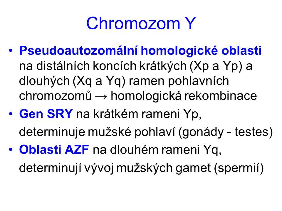 Chromozom Y Pseudoautozomální homologické oblasti na distálních koncích krátkých (Xp a Yp) a dlouhých (Xq a Yq) ramen pohlavních chromozomů → homologi