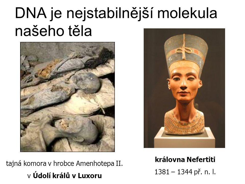 DNA je nejstabilnější molekula našeho těla tajná komora v hrobce Amenhotepa II. v Údolí králů v Luxoru královna Nefertiti 1381 – 1344 př. n. l.