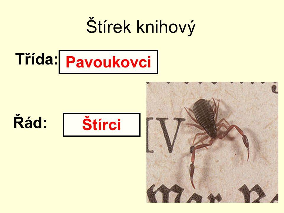 Štírek knihový Třída: Řád: Pavoukovci Štírci