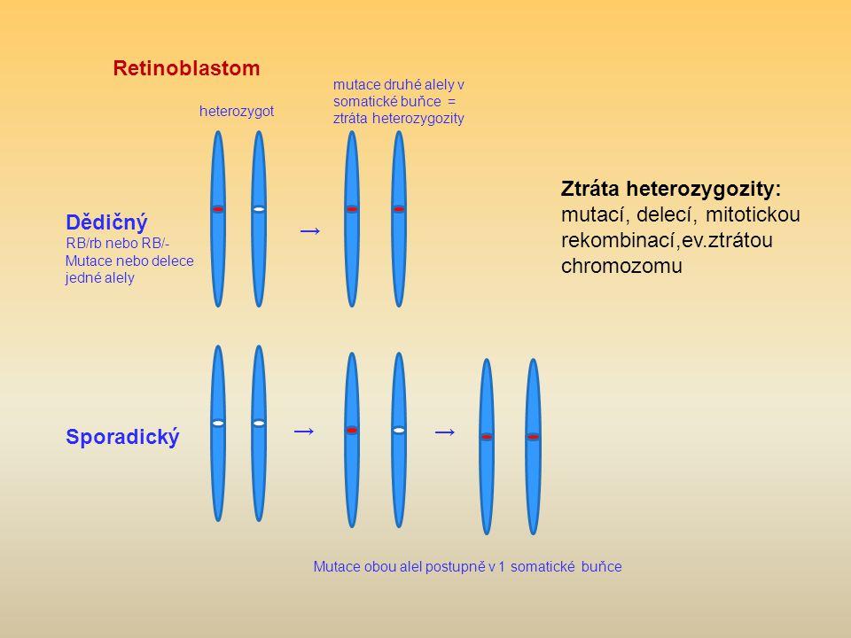 Retinoblastom Dědičný RB/rb nebo RB/- Mutace nebo delece jedné alely Sporadický heterozygot mutace druhé alely v somatické buňce = ztráta heterozygozi
