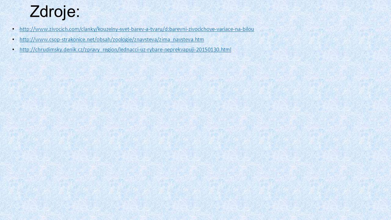 Zdroje: http://www.zivocich.com/clanky/kouzelny-svet-barev-a-tvaru/d:barevni-zivocichove-variace-na-bilou http://www.csop-strakonice.net/obsah/zoologie/znavsteva/zima_navsteva.htm http://chrudimsky.denik.cz/zpravy_region/lednacci-uz-rybare-neprekvapuji-20150130.html