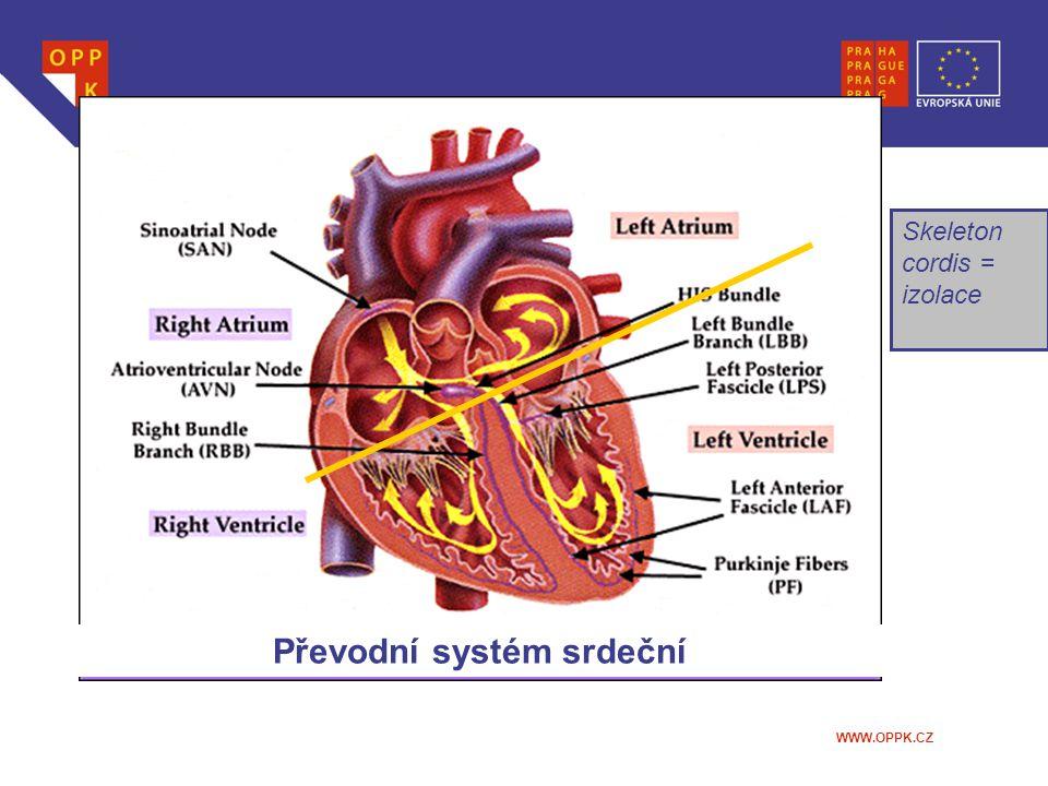 WWW.OPPK.CZ Skeleton cordis = izolace Převodní systém srdeční