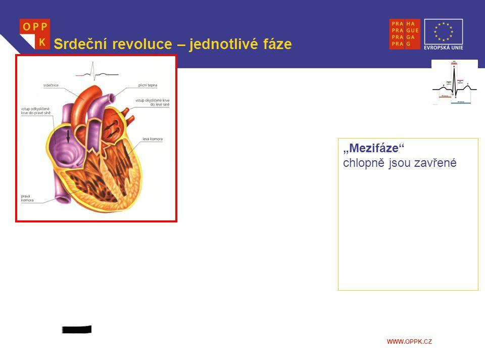 """Srdeční revoluce – jednotlivé fáze """"Mezifáze"""" chlopně jsou zavřené"""