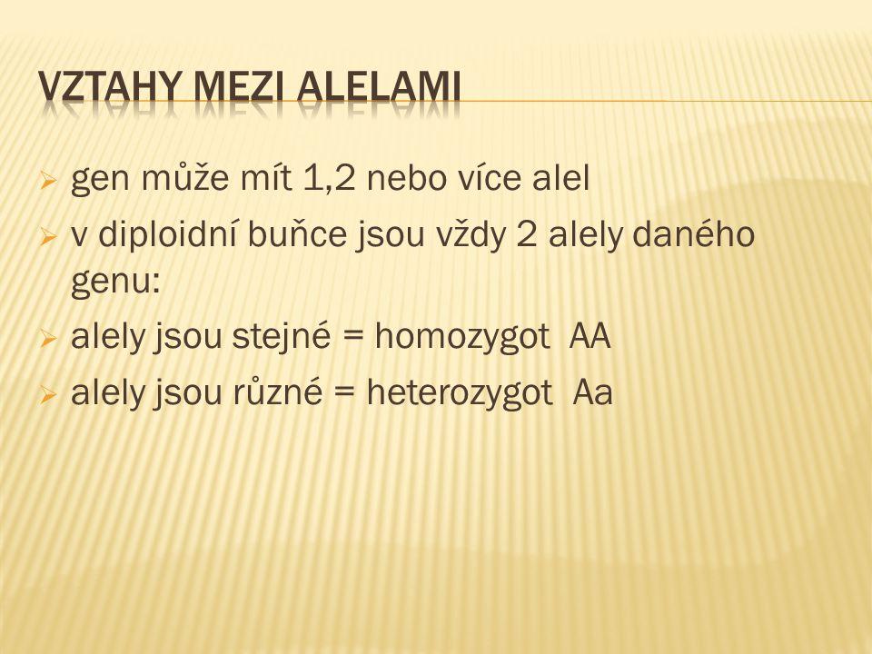  gen může mít 1,2 nebo více alel  v diploidní buňce jsou vždy 2 alely daného genu:  alely jsou stejné = homozygot AA  alely jsou různé = heterozygot Aa