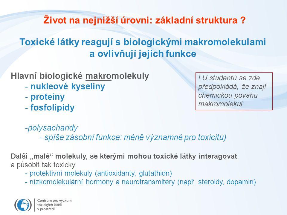 """Toxické látky reagují s biologickými makromolekulami a ovlivňují jejich funkce Hlavní biologické makromolekuly - nukleové kyseliny - proteiny - fosfolipidy -polysacharidy - spíše zásobní funkce: méně významné pro toxicitu) Další """"malé molekuly, se kterými mohou toxické látky interagovat a působit tak toxicky - protektivní molekuly (antioxidanty, glutathion) - nízkomolekulární hormony a neurotransmitery (např."""