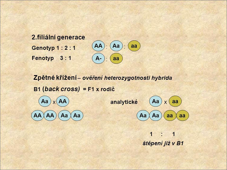 Dihybridismus 2 alelické páry – neseny různými páry homologních chromozomů - segregují nezávisle 2 typy homozygotních křížení P: AABB x aabb AAbb x aaBB F1: AaBb Druhy gamet : AB Ab aB ab 1 : 1 : 1 : 1