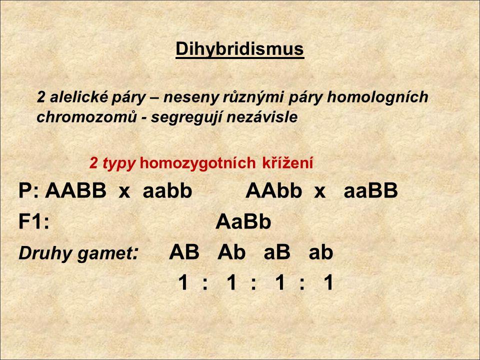 Dihybridismus 2 alelické páry – neseny různými páry homologních chromozomů - segregují nezávisle 2 typy homozygotních křížení P: AABB x aabb AAbb x aa