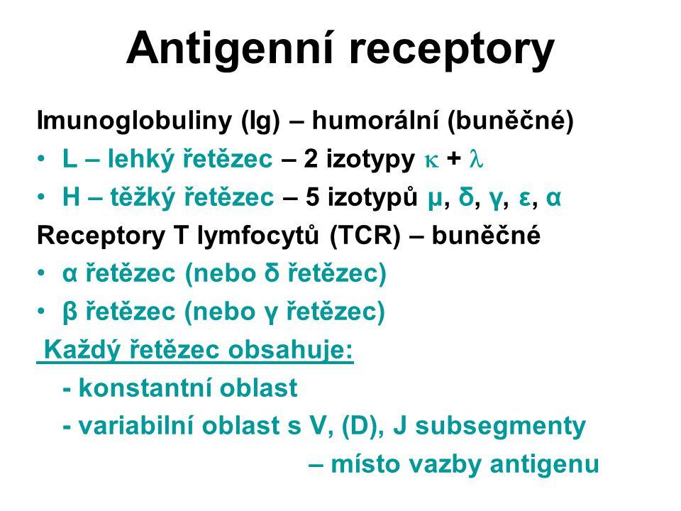 Antigenní receptory Imunoglobuliny (Ig) – humorální (buněčné) L – lehký řetězec – 2 izotypy  + H – těžký řetězec – 5 izotypů μ, δ, γ, ε, α Receptory