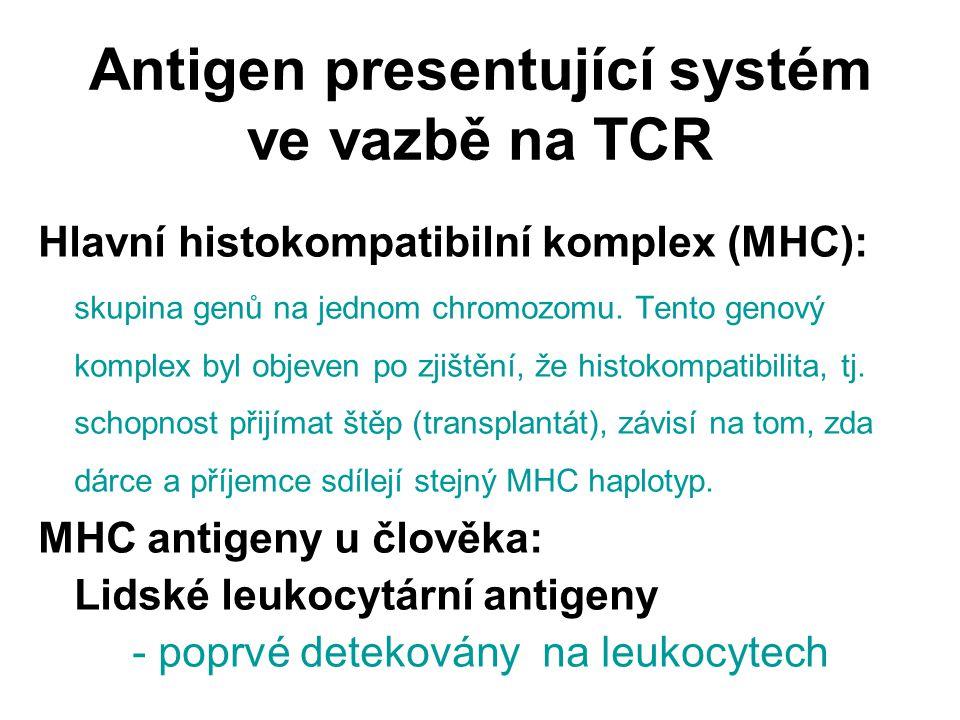 Antigen presentující systém ve vazbě na TCR Hlavní histokompatibilní komplex (MHC): skupina genů na jednom chromozomu. Tento genový komplex byl objeve