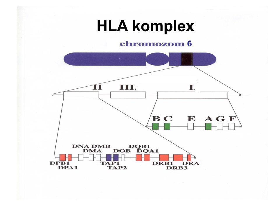 HLA komplex 6
