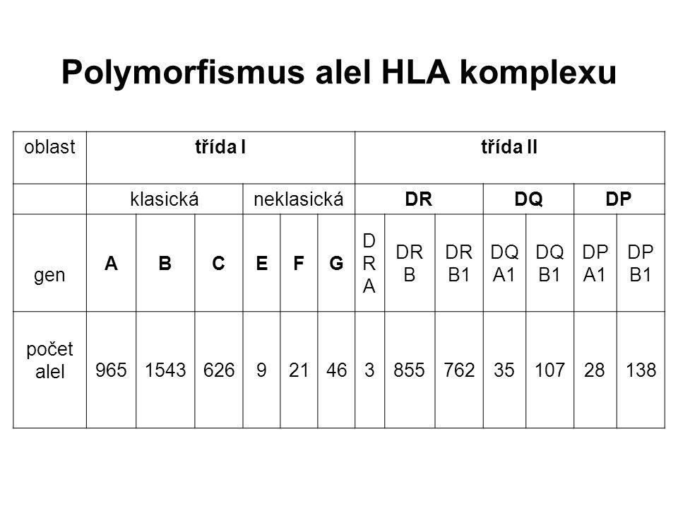 Polymorfismus alel HLA komplexu oblasttřída Itřída II klasickáneklasickáDRDQDP gen ABCEFG DRADRA DR B DR B1 DQ A1 DQ B1 DP A1 DP B1 počet alel 9651543