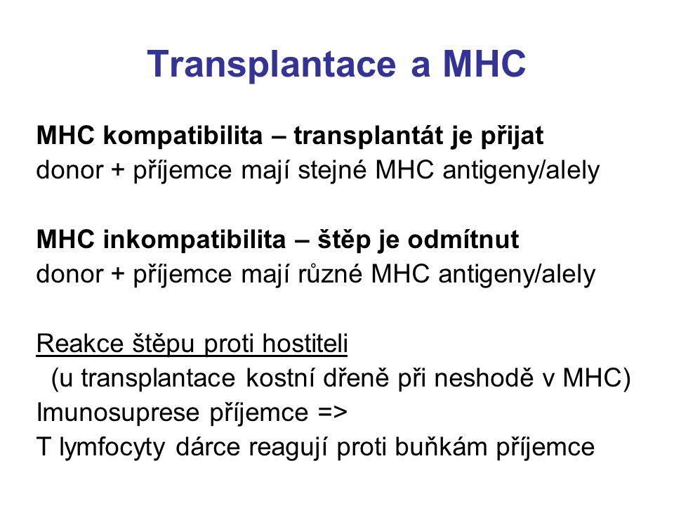 Transplantace a MHC MHC kompatibilita – transplantát je přijat donor + příjemce mají stejné MHC antigeny/alely MHC inkompatibilita – štěp je odmítnut