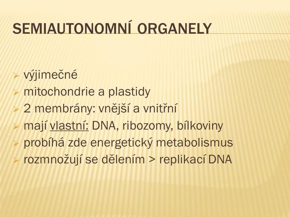 SEMIAUTONOMNÍ ORGANELY  výjimečné  mitochondrie a plastidy  2 membrány: vnější a vnitřní  mají vlastní: DNA, ribozomy, bílkoviny  probíhá zde ene