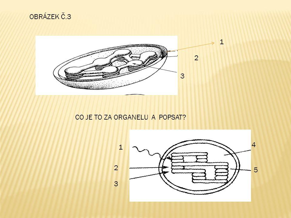 CYTOSKELET  nemembránová organela  dynamická a proměnlivá struktura !.