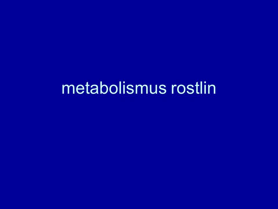 metabolismus rostlin