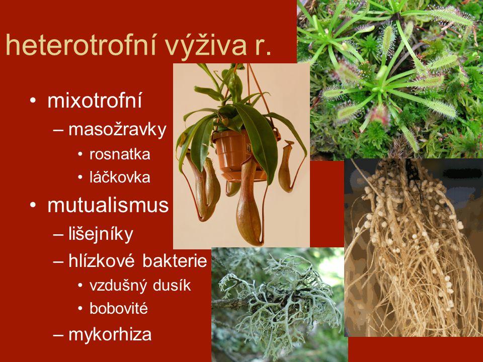 heterotrofní výživa r. mixotrofní –masožravky rosnatka láčkovka mutualismus –lišejníky –hlízkové bakterie vzdušný dusík bobovité –mykorhiza