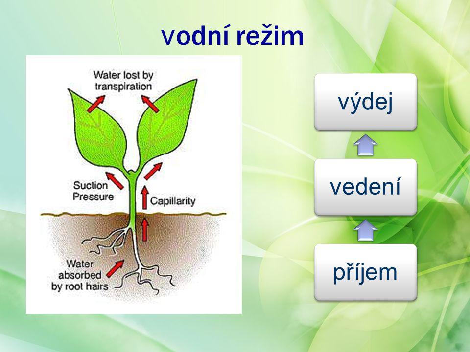 heterotrofní výživa r.