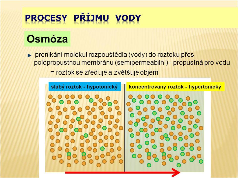 příjem vody turgor hypotonické prostředí –plazmoptýza hypertonické prostředí –plazmolýza –deplazmoýza