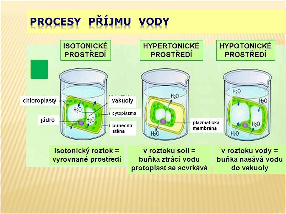 chloroplasty jádro ISOTONICKÉ PROSTŘEDÍ vakuoly cytoplazma buněčná stěna Isotonický roztok = vyrovnané prostředí HYPERTONICKÉ PROSTŘEDÍ plazmatická me