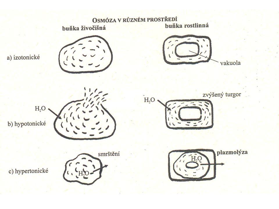 Příjem vody Vedení vody Výdej vody Cévy a cévice S A S – symplastická cesta * z buňky do buňky přes membrány * pomalé, krátké vzdálenosti nutno dodat energii A – apoplastická cesta * buněčná stěna a volné prostory * rychlé, delší vzdálenosti TRANSPIRACE