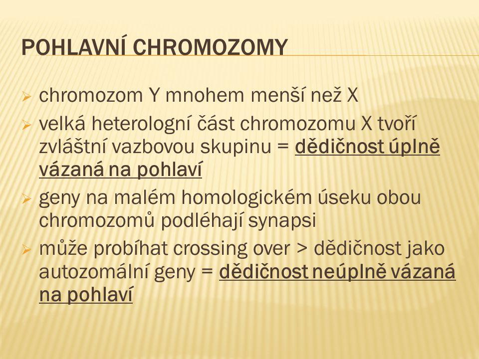 POHLAVNÍ CHROMOZOMY  chromozom Y mnohem menší než X  velká heterologní část chromozomu X tvoří zvláštní vazbovou skupinu = dědičnost úplně vázaná na