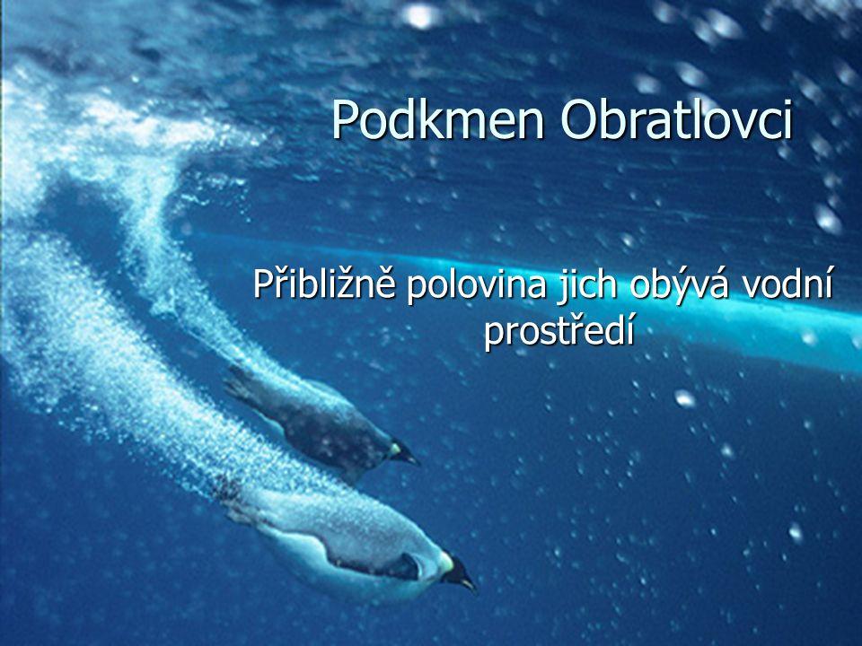 Makrofágní ryby- požerákové zuby Makrofágní ryby- požerákové zuby Mikrofágní ryby- filtrační aparát Mikrofágní ryby- filtrační aparát Třída Ryby Třída Ryby o Podtřída: Dvojdyšní o Podtřída: Lalokoploutví o Podtřída: Paprskoploutví  Nadřád: Násadcoploutví  Nadřád: Chrupavčití  Nadřád: Mnohokostnatí  Nadřád: Kostnatí