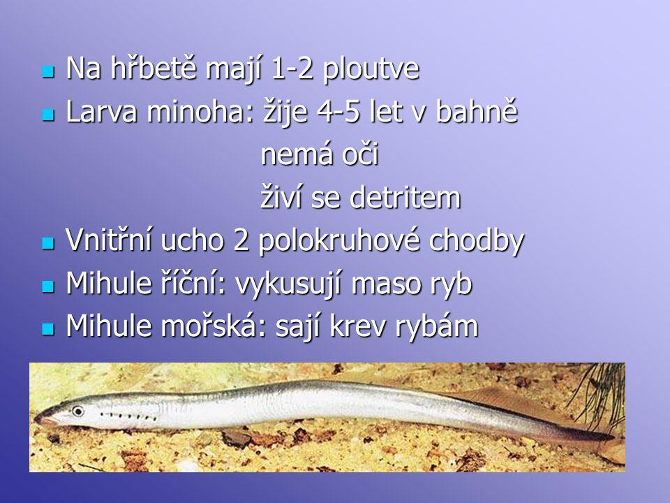 Na hřbetě mají 1-2 ploutve Na hřbetě mají 1-2 ploutve Larva minoha: žije 4-5 let v bahně Larva minoha: žije 4-5 let v bahně nemá oči nemá oči živí se