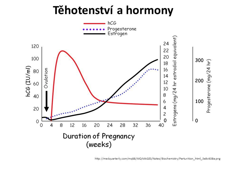 Placenta endokrinní orgán - lidský choriový gonadotropin (hCG), lidský placentární laktogen (lidský chorionsomatomamotropin, hCS), progesteron, estrogeny a relaxin.