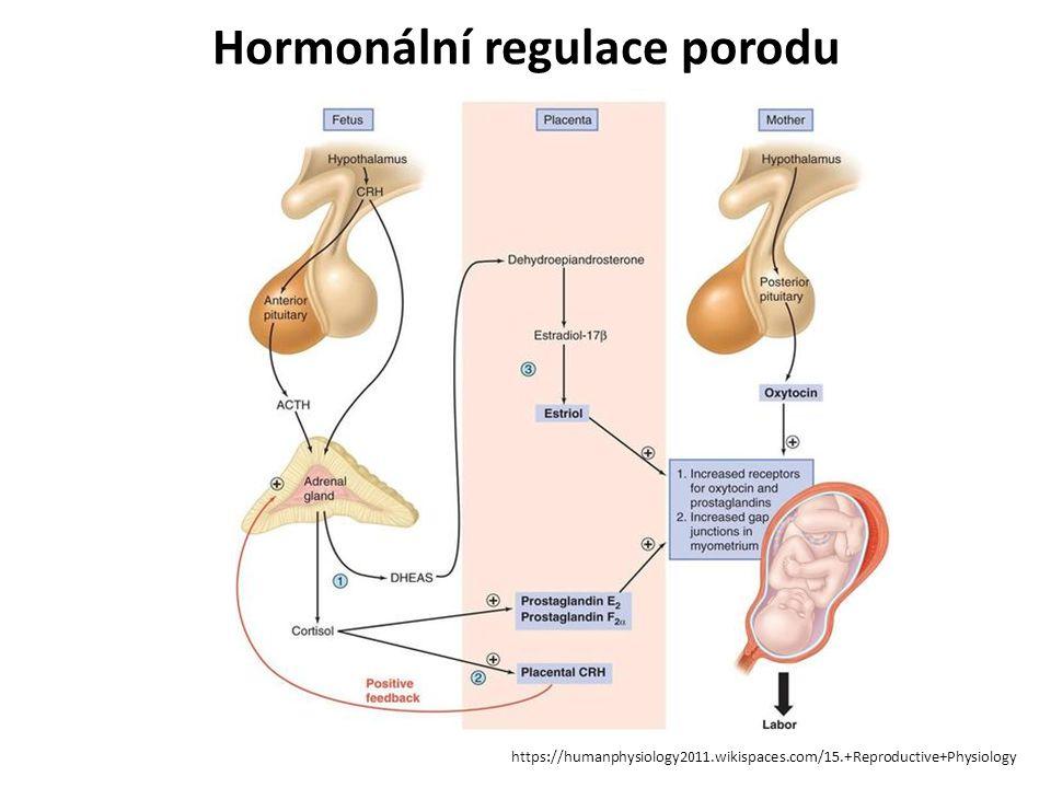 Hormonální regulace porodu https://humanphysiology2011.wikispaces.com/15.+Reproductive+Physiology