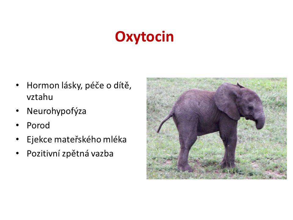 Oxytocin Hormon lásky, péče o dítě, vztahu Neurohypofýza Porod Ejekce mateřského mléka Pozitivní zpětná vazba