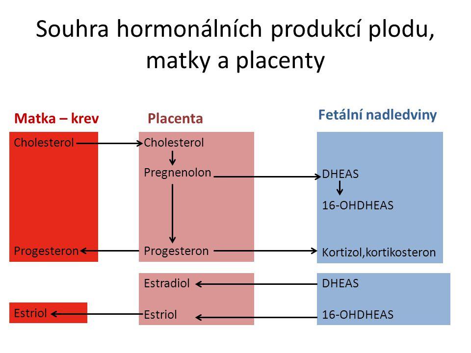 Souhra hormonálních produkcí plodu, matky a placenty Cholesterol Pregnenolon Progesteron Placenta Estradiol Estriol DHEAS 16-OHDHEAS Kortizol,kortikos