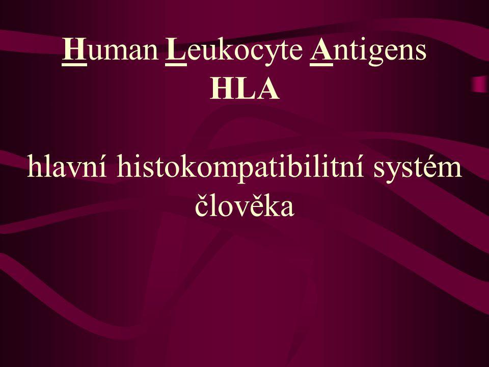 Human Leukocyte Antigens HLA hlavní histokompatibilitní systém člověka