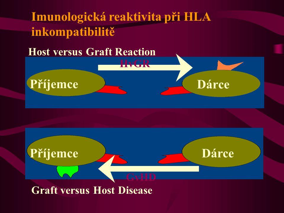 GvHD DárcePříjemce Imunologická reaktivita při HLA inkompatibilitě Příjemce Dárce HvGR Host versus Graft Reaction Graft versus Host Disease