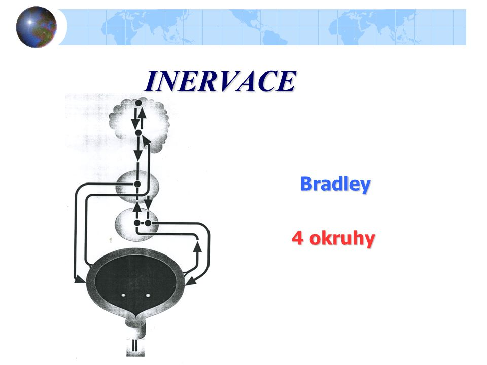 INERVACE Bradley 4 okruhy 4 okruhy