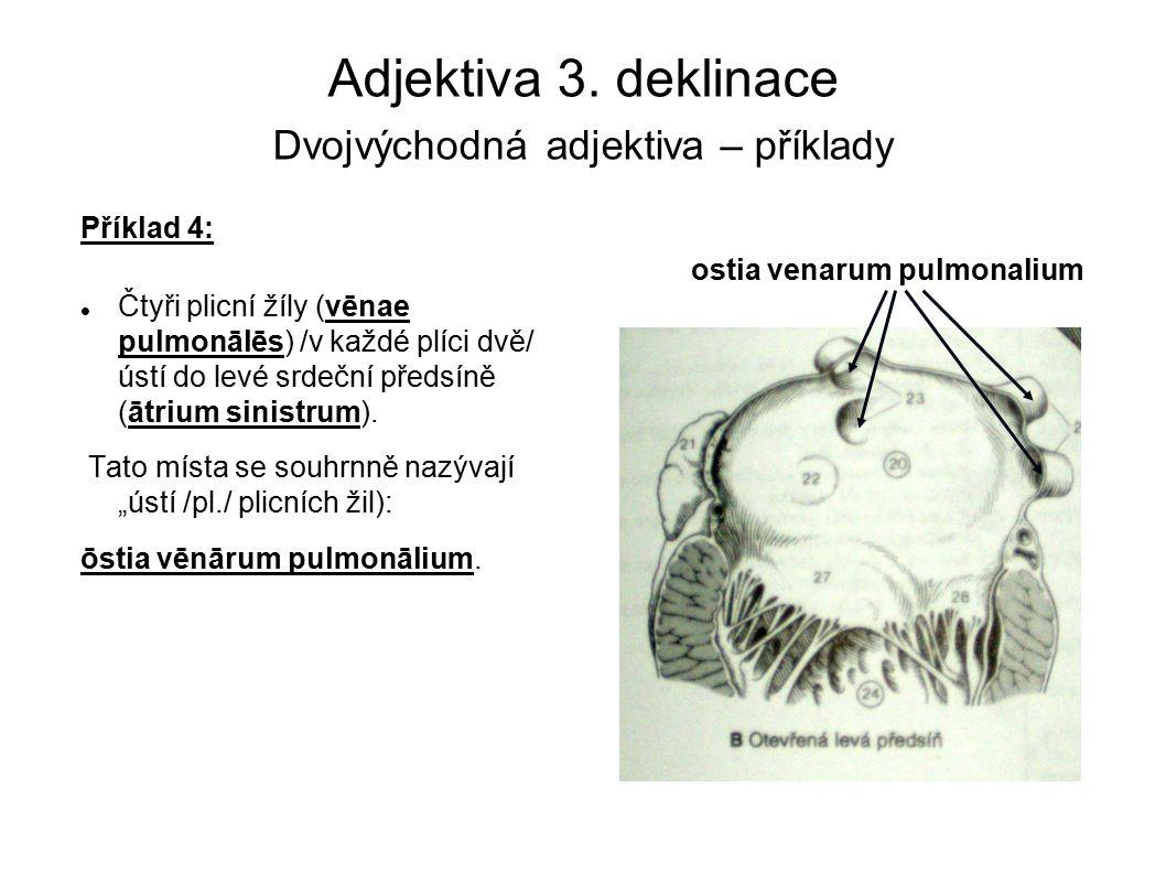 Adjektiva 3. deklinace Dvojvýchodná adjektiva – příklady Příklad 4: Čtyři plicní žíly (vēnae pulmonālēs) /v každé plíci dvě/ ústí do levé srdeční před
